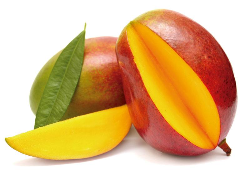 mangifera